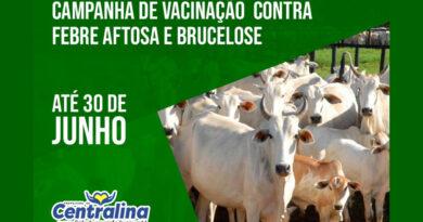 A vacinação contra a Brucelose é obrigatória e tem prazo para ser realizada